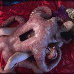 Le Bazar du Bizarre – Objet Sexuel