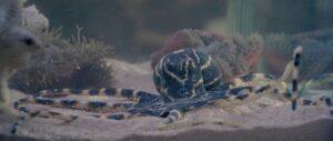 octopussy007octopussy (2)