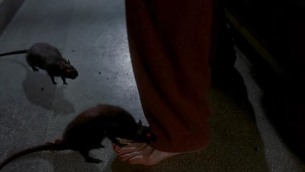 rats2003 (6)