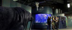 aquariumofthedead (8)